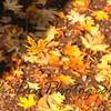 Falling_Leaf-163-2