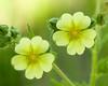 Elm Creek Flowers - June 2008