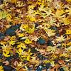 Falling_Leaf-151