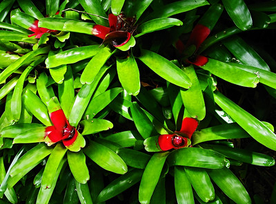 HI 2011 Maui 96