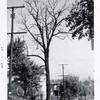 Dead Tree (00550)