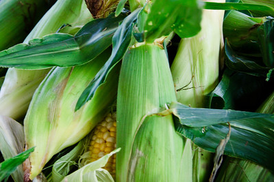 Corn on the Cob DSC1262