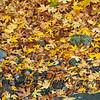Falling_Leaf-122