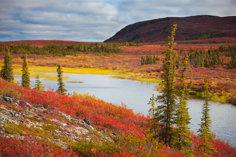The beautiful tundra in fall splendour