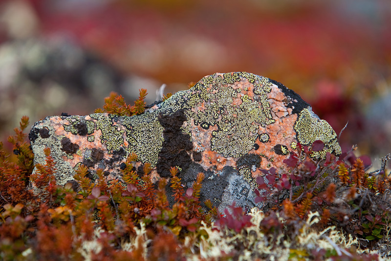 Close-up of a rock showing many varieties of lichen