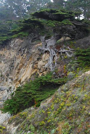 Point Lobos 6-27-2008