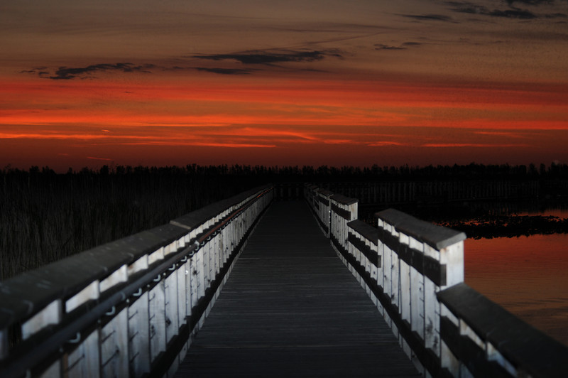 Sunrise at the boardwalk at Point Pelee Provincial Park