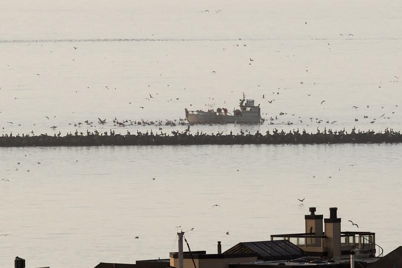 Herring fishing off Richmond Breakwater