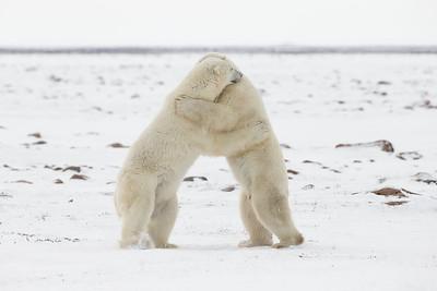 Give a hug, get a hug