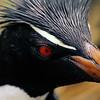 Penguin 03