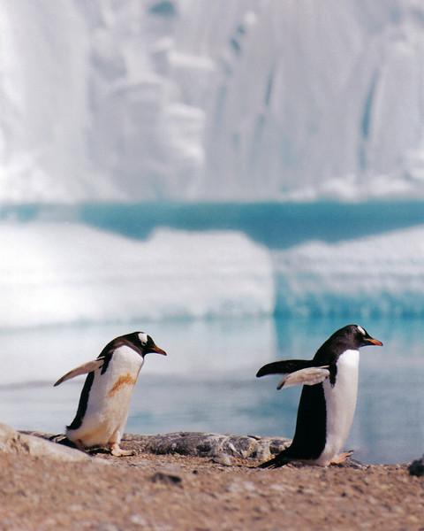 Penguins 09