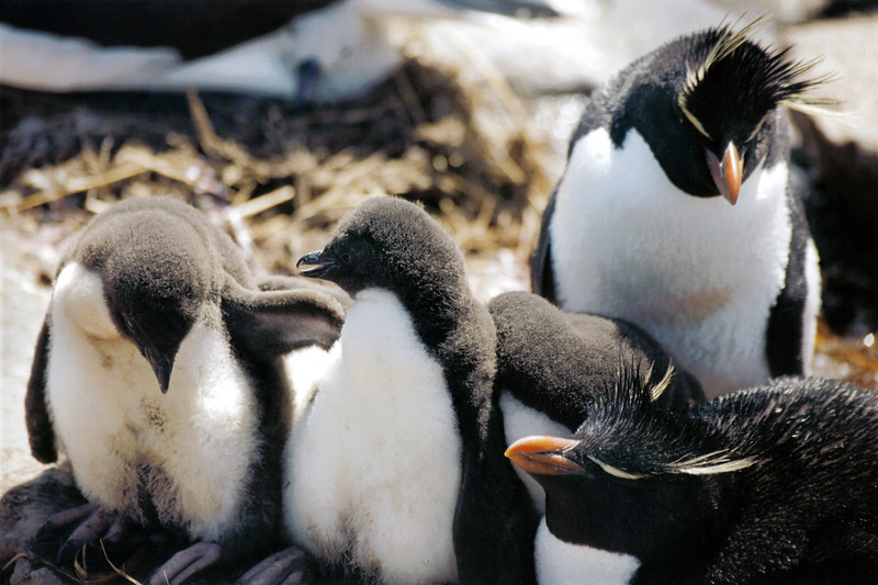 Penguins 08