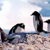 Penguin 06