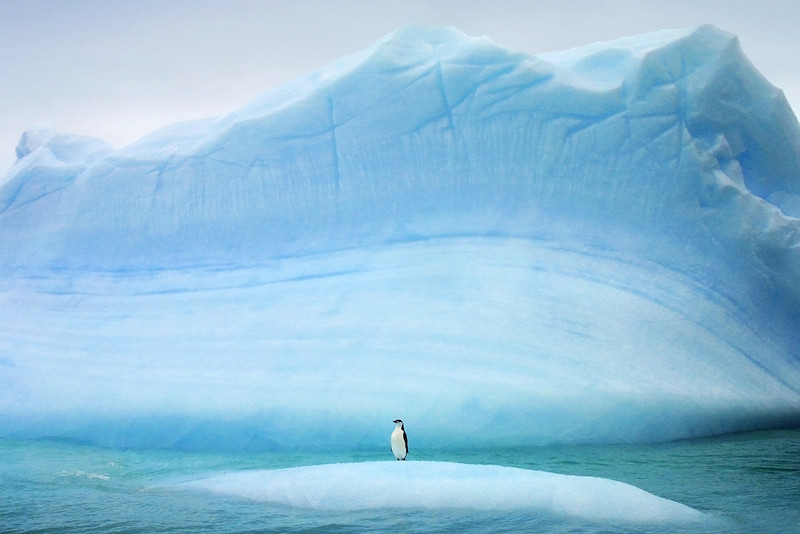 Individual penguin on huge iceberg in Antarctica. Award winning photograph by Christian Wilkinson.