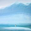 Individual penguin on huge iceberg in Antarctica. Award winning photograph by Christian Wilkinson.