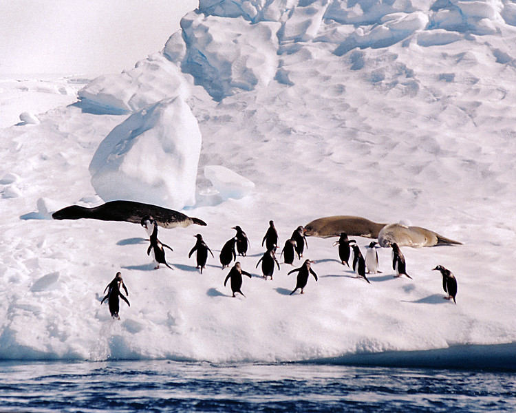 Penguins 07