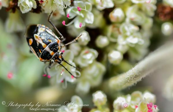 Tiny Beetle