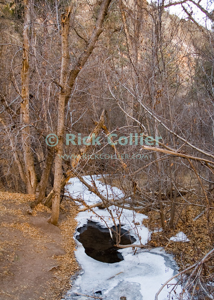 Bandelier National Monument, near Los Alamos and Santa Fe, New Mexico, USA.  While the water never completely stops flowing, snow and ice encrust Frijoles Creek in the winter.  © Rick Collier<br /> <br /> <br /> <br /> <br /> <br /> <br /> US USA New Mexico Santa Fe Bandelier National Monument Frijoles Creek Canyon valley canyon native american view tree trees forest woods stream river snow ice