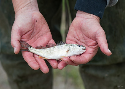 This little fish may find a new home at the Nature Center.