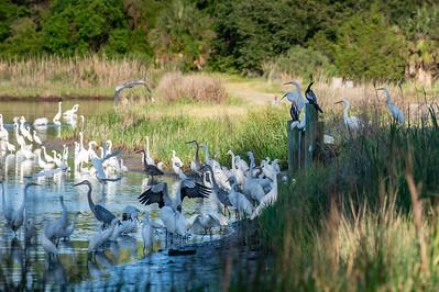 Ponds of Brays Island