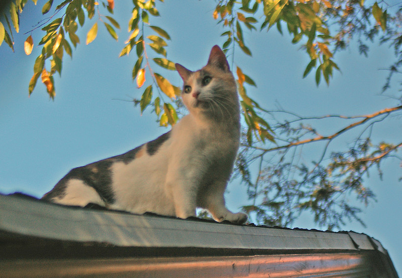 Wolfie on roof