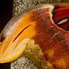 Atlas Moth wingtip