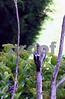 IMG_1256 Finch w 2 woodpeckers Vt pc best