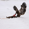 IMG_2818Young Eagle 0_ 1_ 2_-1_-2_fused