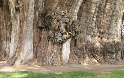 Preety and strange trees