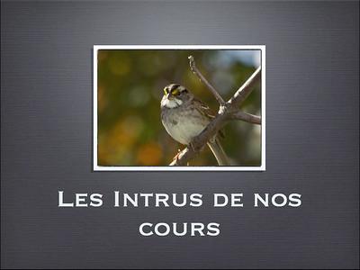 Presentation Les Intrus de nos cours 2010