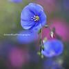 Blue Flax Kristen Rice Buffalo NY
