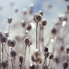 Ice flower 3