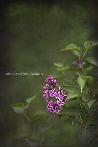 White purple lilac vintage