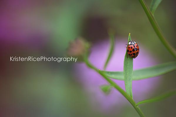 Ladybug purple flower Kristen Rice