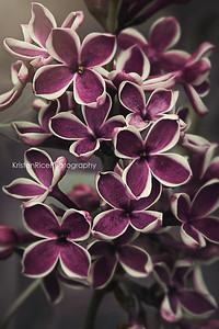 White purple lilac vintage 2