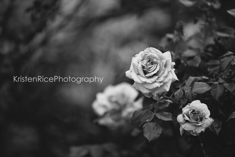BW roses 2