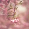 Blossom 1 lavender