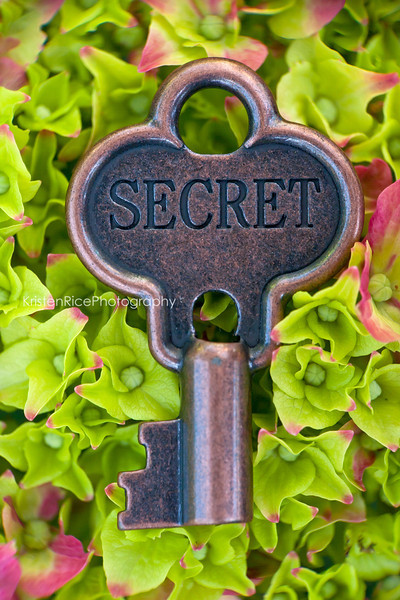Secret Hydrangea Key Green Pink