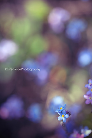 forget me nots Kristen Rice pink blue