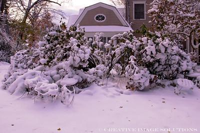 Garden Survey Dec 29 2012