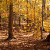 is always worth it in the woods.  Taken in Pulpit Rock Conservation area.  The beech leaves still cling gloriously.