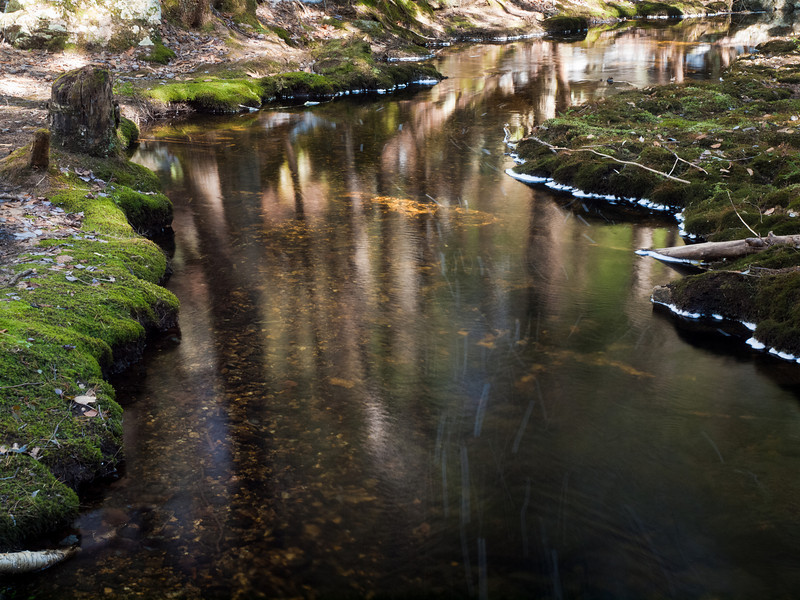 I was struck by how the right side of the brook flows faster than the left.  Those white streaks are bubbles floating on the surface.