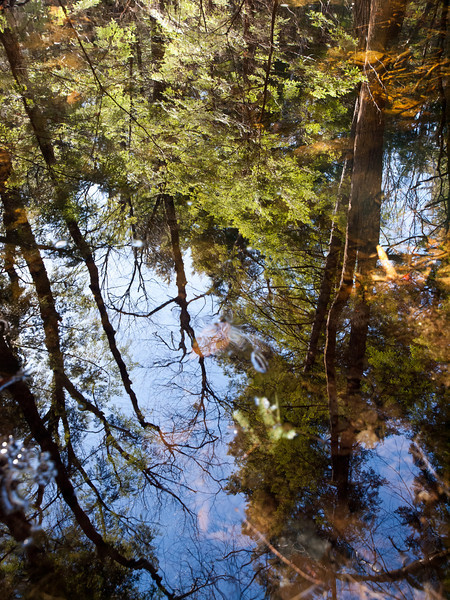 Reflections of the sky & forest at Pulpit Rock Conservation Area