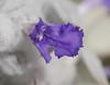 closeup_single flower_P1140093