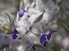 closeup_multiple flowers_P1030498