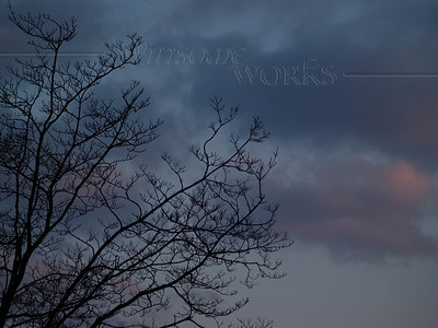 Sycamore branches silhouetted on moody April sunset
