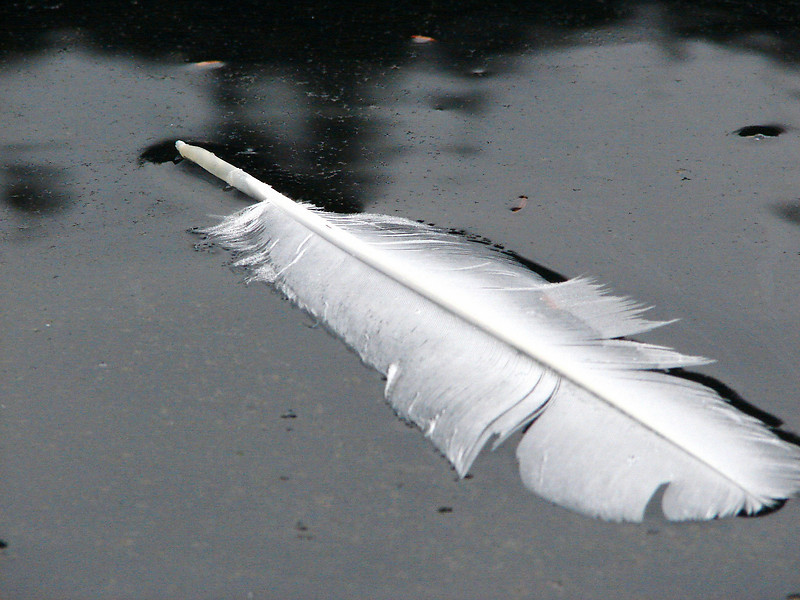 Feather on wet sand.