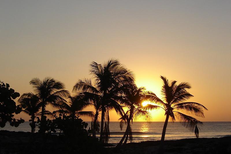sunrise and palms