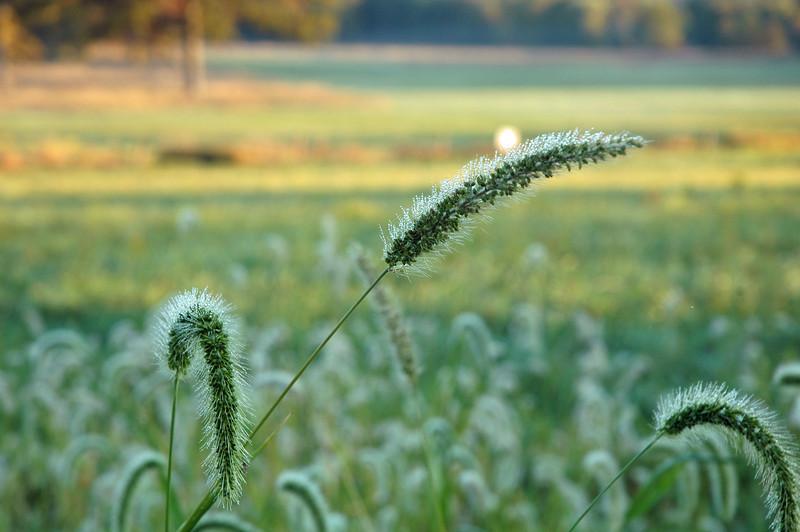 Wagner Farm, Morning Dew