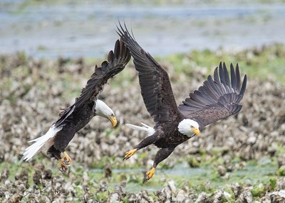 Two Eagles 8959